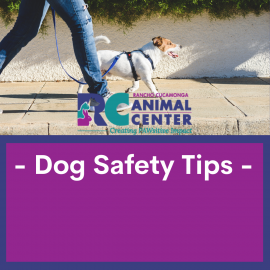 Dog Safety Tips graphic